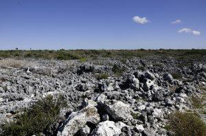 Het-leefgebied-van-Cyclura-nubila-in-Guanahacabibes-Peninsula