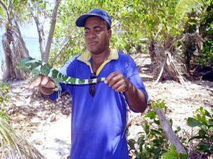 Fiji National Trust Ranger met één van de volwassen fokleguanen - foto Peter Harlow