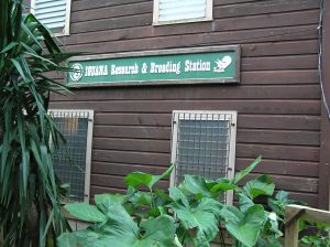 Iguana research and breeding station